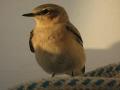 Der Vogel hatte Zuflucht gesucht und hatte keine Angst