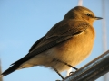 Vogel im Sonnenschein