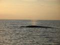 Wal mit Fontäne