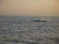 Fetter Wal